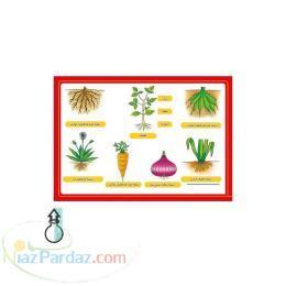 فروش ویژه انواع پوستر های آموزشی با نازلترین قیمت