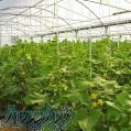 فروش گلخانه 5000 متری به همراه آزمایشگاه مجهز