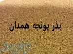 خرید و فروش بذر یونجه همدان