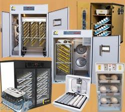 تولید کننده و فروشنده بهترین ماشین های جوجه کشی خانگی و صنعتی و نیمه صنعتی