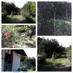 فروش فوری باغ و زمین کشاورزی