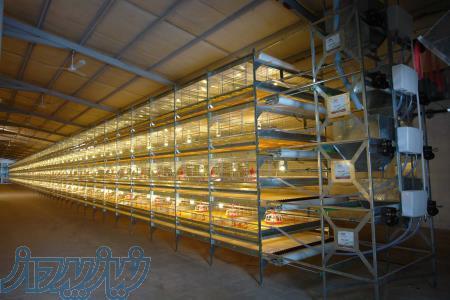 تجهیز سالنهای مرغداری با قفس های تمام اتوماتیک پرورش مرغ تخم گذار و گوشتی و پولت