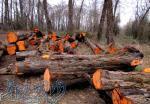 خرید عمده چوب