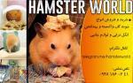 فروش انواع خرگوش،خوکچه هندی و همسترکاملا واکسینه شده!!