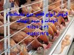 فروش فوری قفس مرغ تخمگذار دست دوم به قیمت مناسب