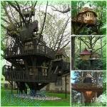 طراحی و ساخت خانه های درختی با هر میزان بودجه