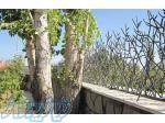 حیدری تولید کننده حفاظ شاخ گوزنی(گل نرده پایتخت)
