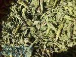 تولید و فروش گیاهان دارویی و سبزی خشک