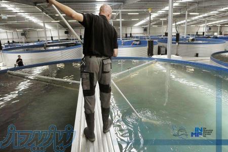 استخر پرورش آبزیان ( ماهی   میگو   خاویار )   (شیلات)