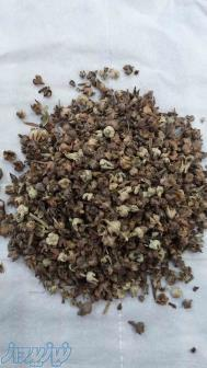 فروش بذر گل گاوزبان