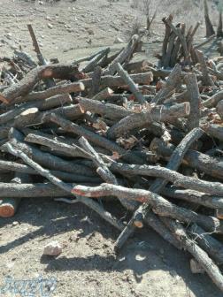 فروش چوب بلوط