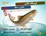 فروشگاه آنلاین ماهی و میگو نمو