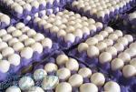 پخش عمده تخم مرغ و تخم بلدرچین به قیمت روز
