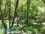 فروش باغ با بنای قدیمی در ملارد کد1181
