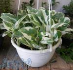 عرضه انواع گیاهان آپارتمانی و کلکسیونی
