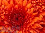 گلاب وعرقیات گیاهی اصل و صددرصدطبیعی