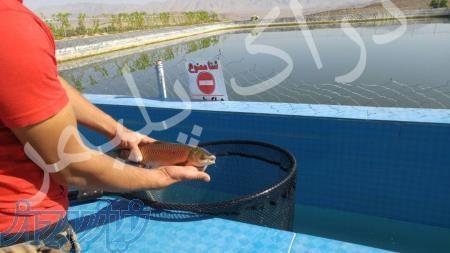 پرورش ماهی واستخرهای پلیمری دارای استاندارد