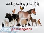 کانال تلگرامی دام وطیور