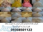 فروش یکجا تعدادمحدودی لباس عروس