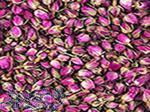 خرید و فروش عمده انواع غنچه گل محممدی(پایار تجار زمردین)