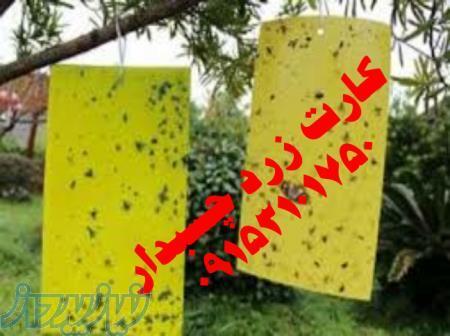 کارت زرد چسبدار جذب کننده حشرات درزگیر پنجره ترمز فرش گیره پله تشک طبی مسدود دریچه کولر عباس چرانی