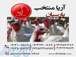 فروش بوقلمون بیوتی سیکس اماده به تحوبل ارسال به اقصی نقاط ایران