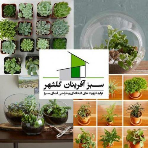 فروش گل و گیاه و تولیدات گلخانه ای09124636057)  - تهران