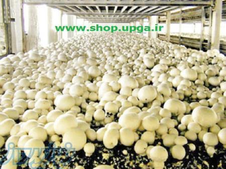 فروش خاک پوششی پاستوریزه و کمپوست برای سالن قارچ
