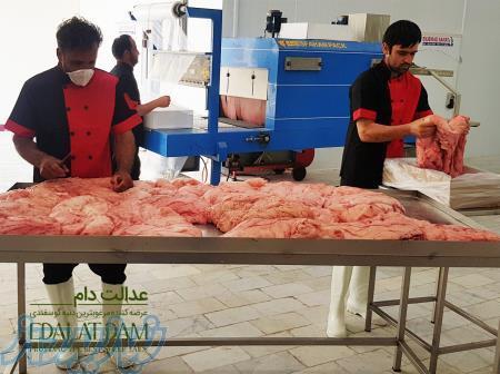 دنبه صادراتی گوسفندی تولید شده عدالت دام