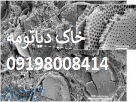 خاک دیاتومه برای ساس
