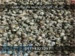 فروش بذر گل گاوزبان ایرانی