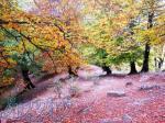 جنگل پیمایی ارفعده در پاییز