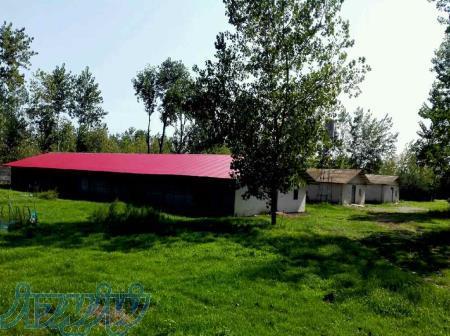فروش مرغداري گوشتي 15000قطعه اي در شمال(گیلان- لنگرود – چمخاله )