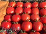 فروش تمامی محصولات کشاورزی