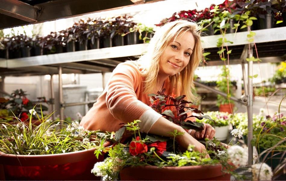 پنل پیامکی برای فروشندگان گل و گیاه